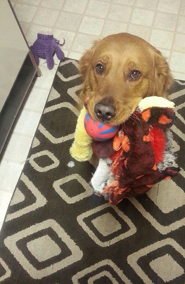 dog toys in mouth