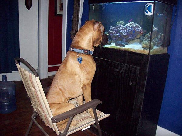 dog watching fish