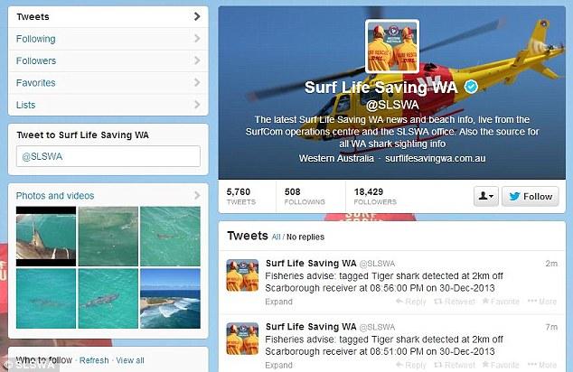 sharks on twitter