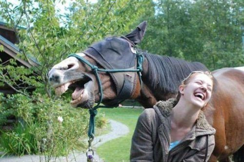 horse and girl laughing