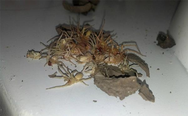 spiders wasps