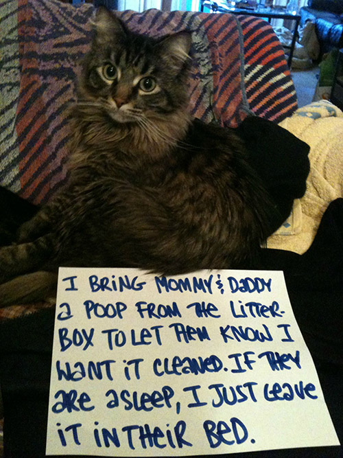 The 27 Naughtiest Cats In The World Hilarious Cat Shaming