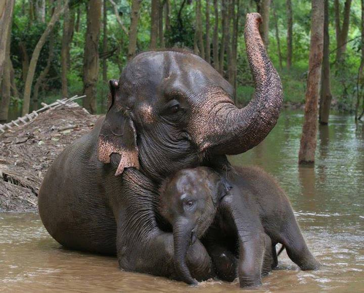 cute elephant love