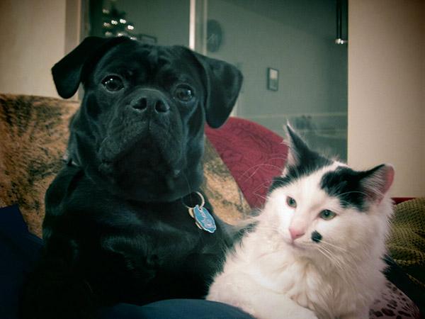 puppy rescues kitten