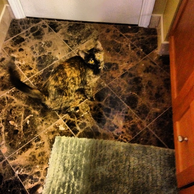cat blends in with tile