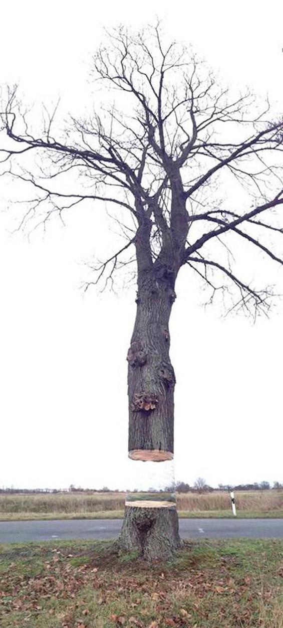 floating tree illusion