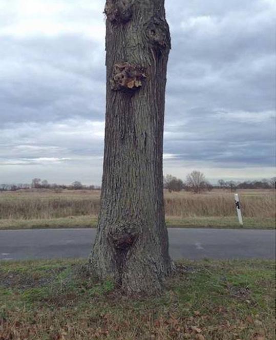 tree optical illusion
