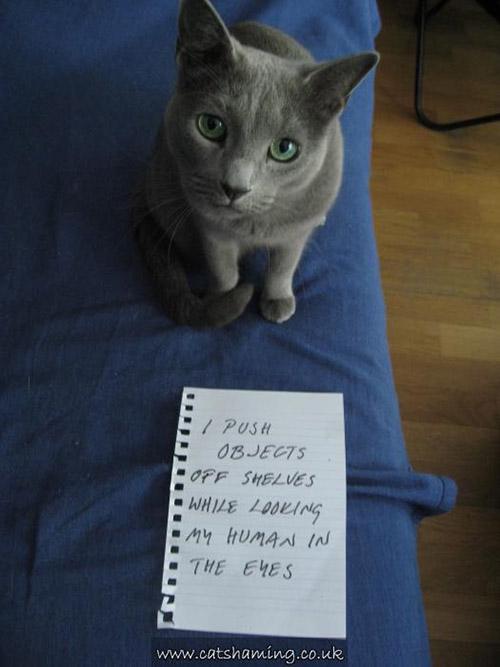 shame cats
