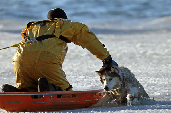 firefighter saves dog from ice