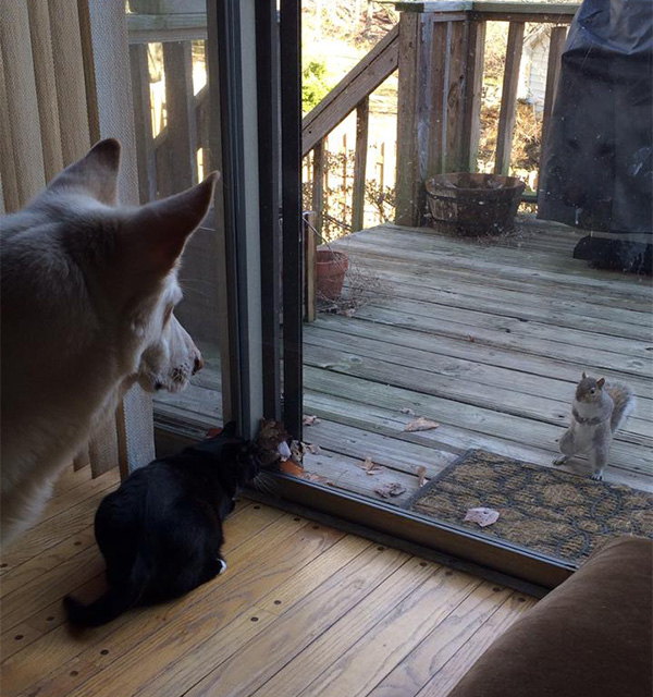 dog and cat staring at squirrel