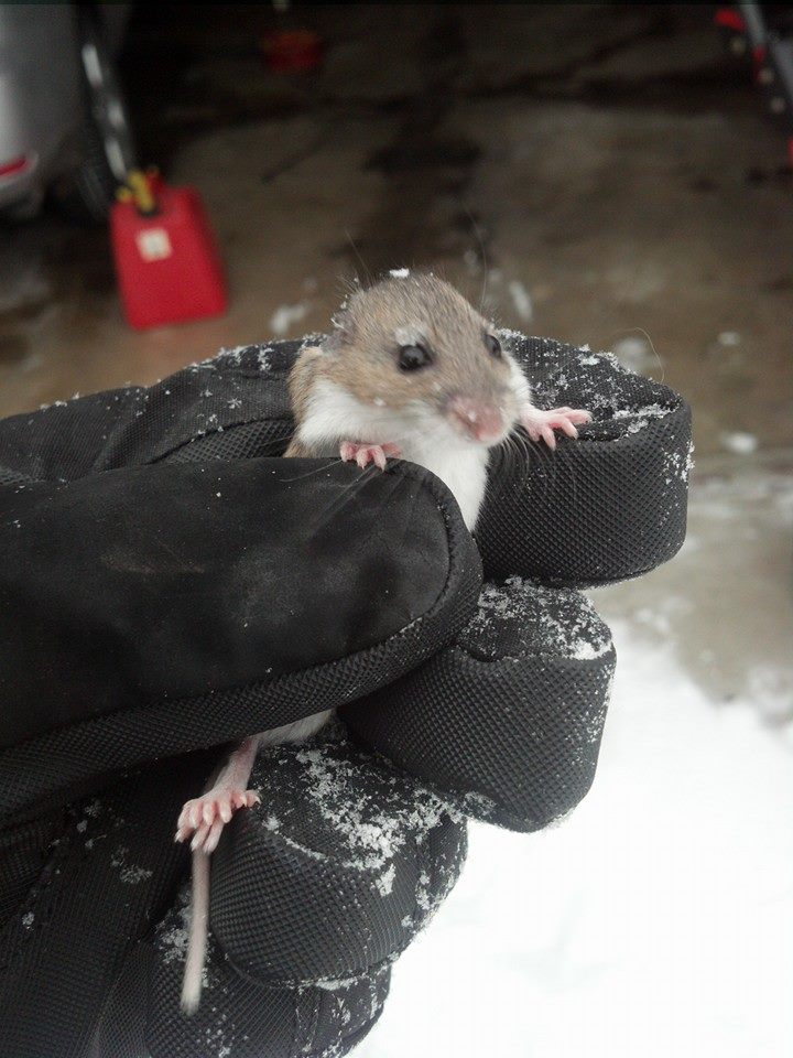 Snow Blower Found : Found this little guy in the snow blower