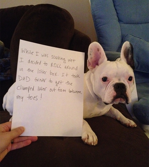 The 27 Naughtiest Dogs In The World Hilarious Dog Shaming