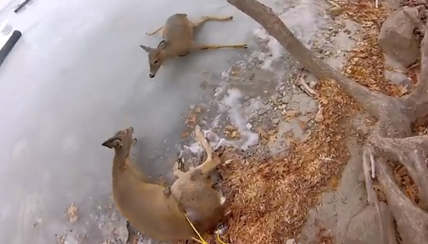 father son rescue deer