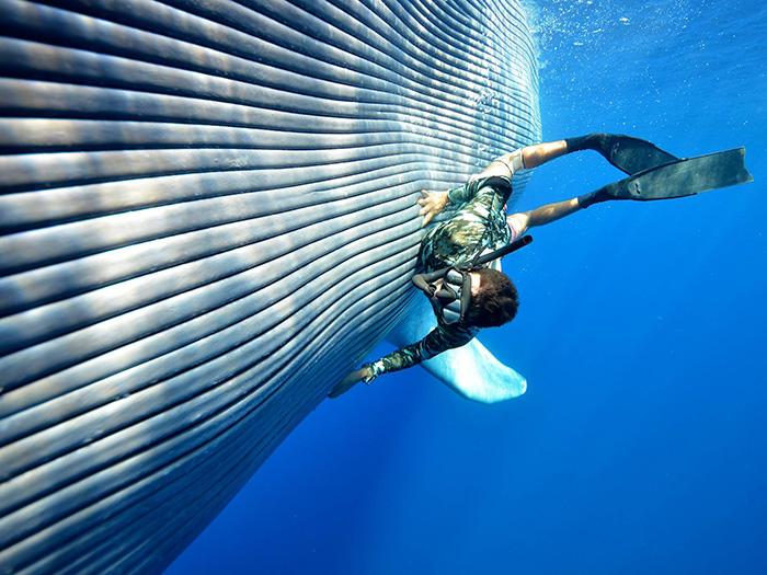 pet a blue whale