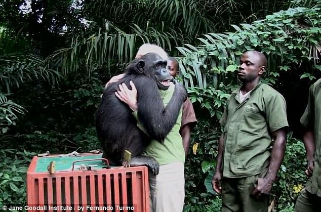 chimp thanks rescuer
