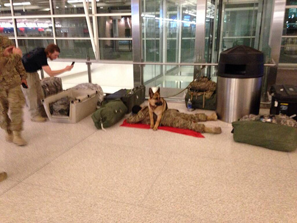 military dog protecting soldier