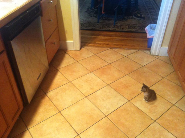 kitten stares at dishwasher