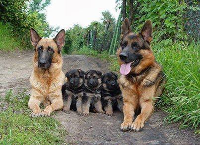 beautiful family of dogs