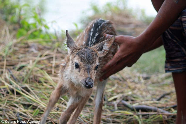 boy saves deer