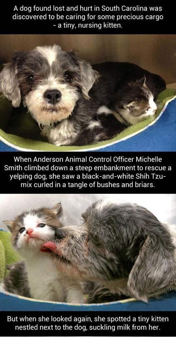 lost dog nursing kitten