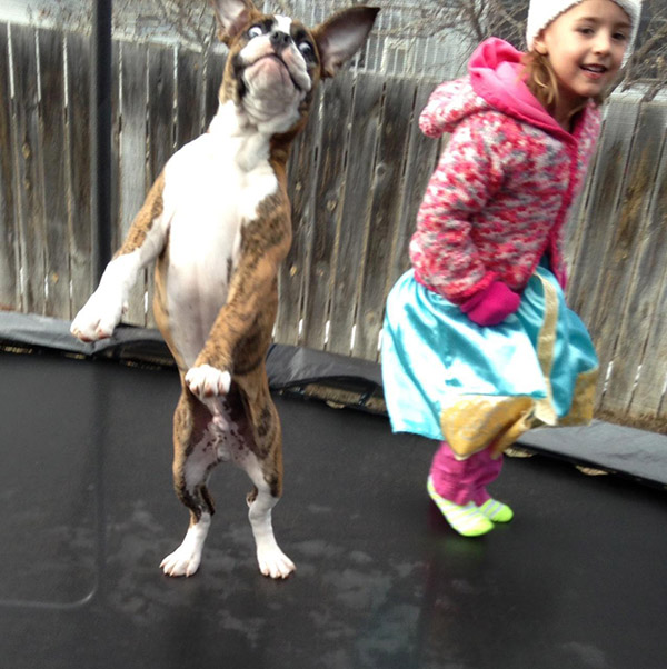 girl and dog on trampoline