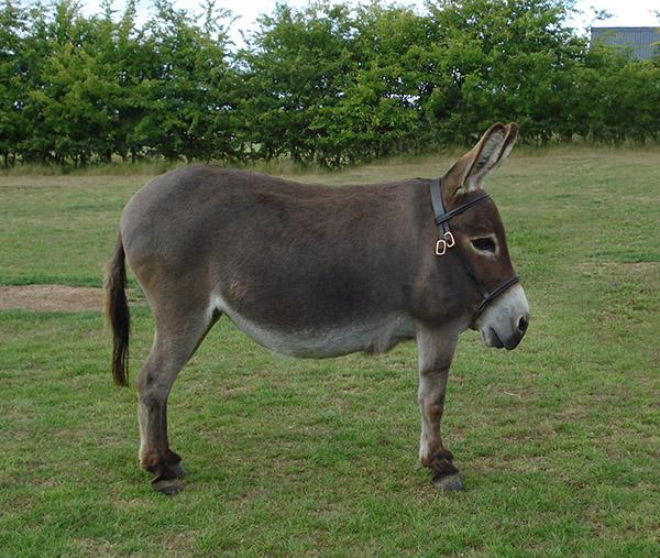 Image of: Funny Animals Without Necks Sunny Skyz 25 Animals Without Necks The Results Are Hilarious