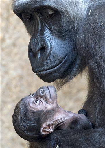 monkey hugging her baby