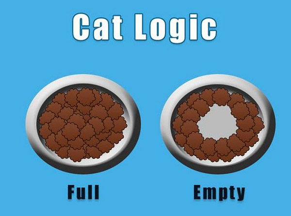 only cat owners understand