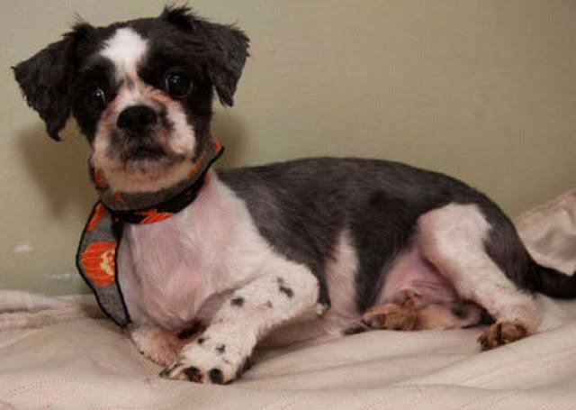 stray dog rescued