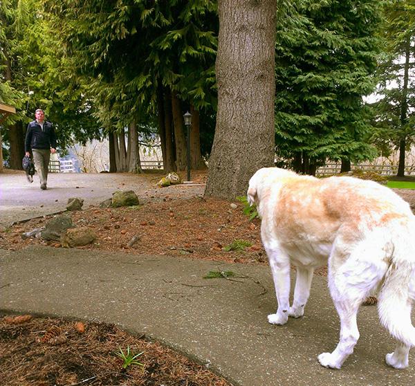 dog greets owner old