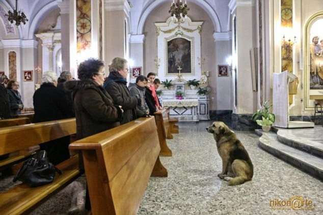 Ciccio dog mass