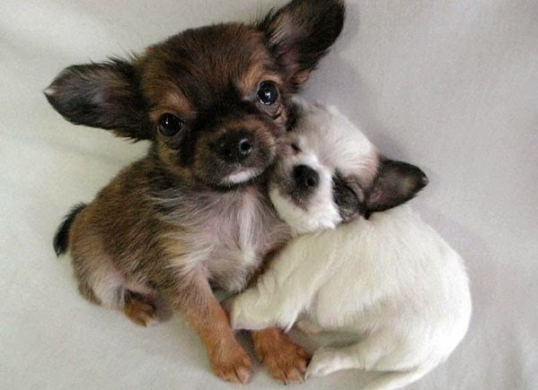 puppies snuggling