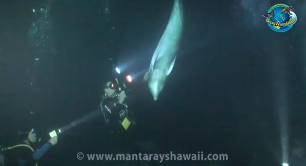 dolphin approaches divers for help