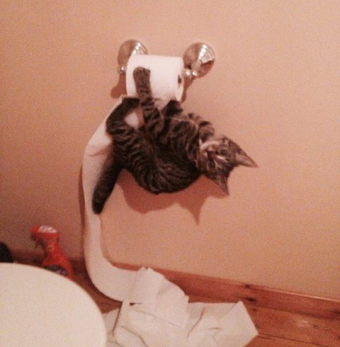 cat hanging on toilet paper rack