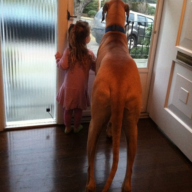 23 Reasons Every Kid Should Grow Up With A Dog