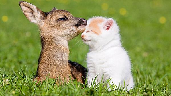 baby deer and kitten