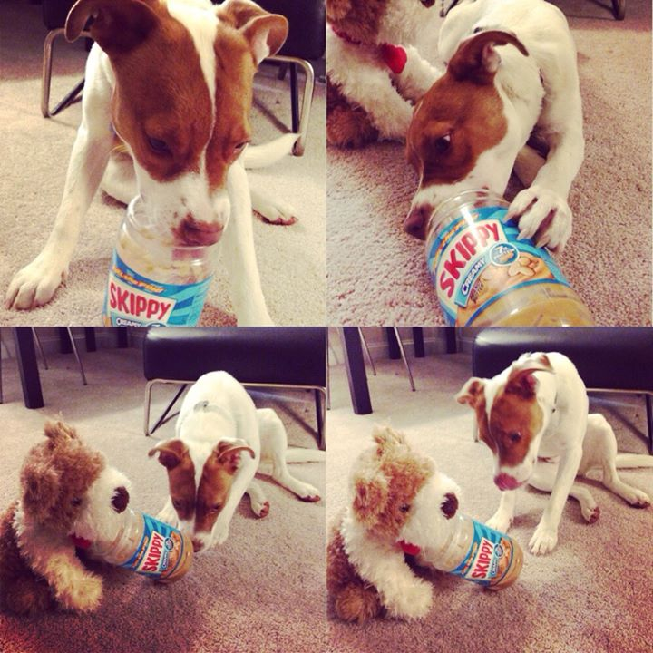 dog sharing peanut butter with stuffed animal