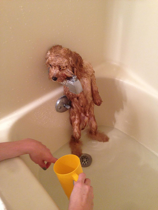 not having the bath dog