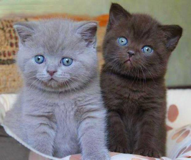 cutest kittens ever