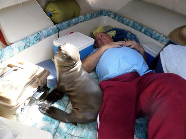 seal takes nap with fisherman