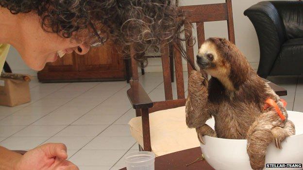 sloth armageddon