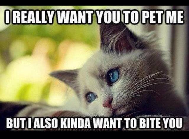 cat funny pet bite