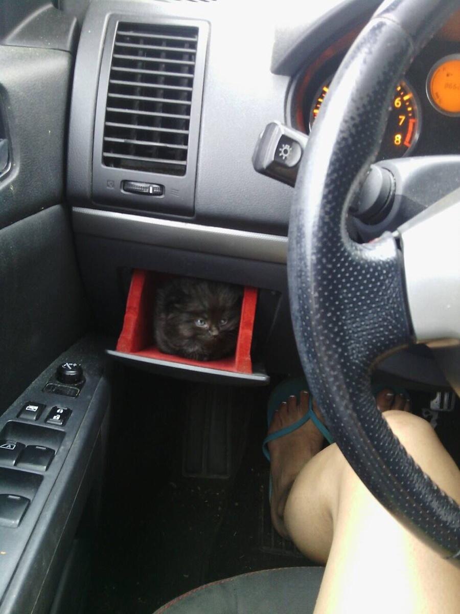 new cars kitten holder