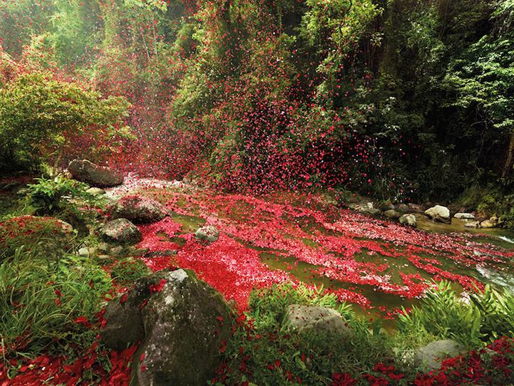 flower petals Costa Rica
