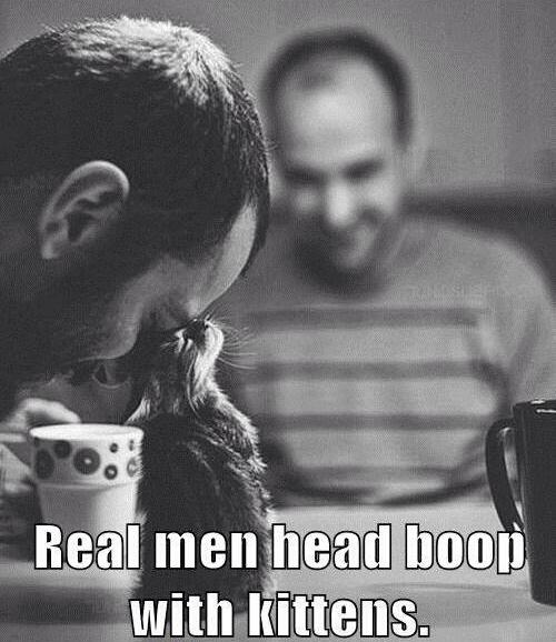 real men boop kittens