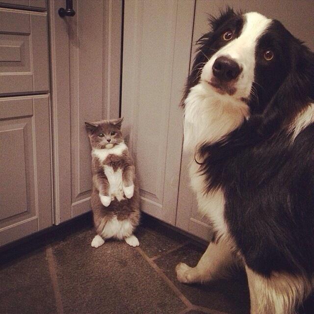 dog corners cat