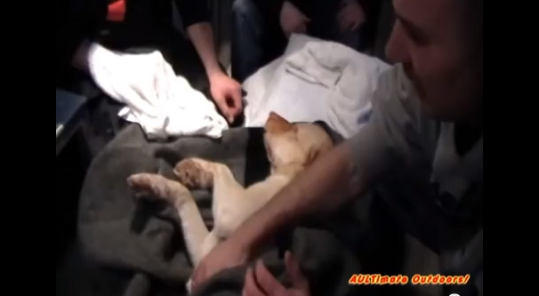 dog rescue freezing