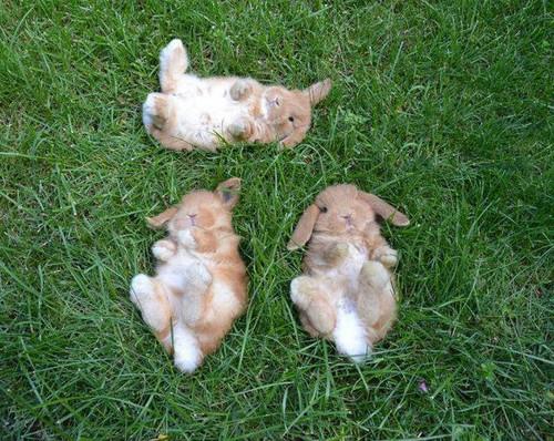 baby bunnies in field