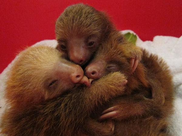 sloths hugging