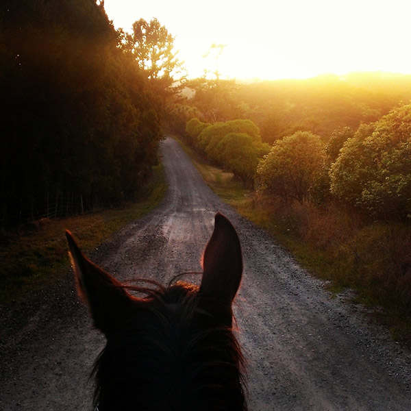 beautiful morning for a horse ride